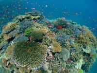 カラフルサンゴ