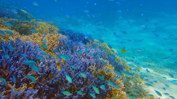 平久保珊瑚