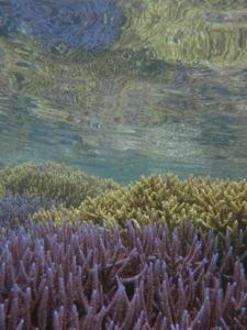 色彩豊かなえだ珊瑚