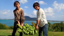 ペンションでとれたバナナ