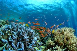 色とりどりのサンゴと魚