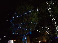 6.1:200:150:0:0:石垣島は・・・:right:1:1:石垣島の気候は17度。どうもクリスマスらしくないんですけど、イルミネーションはありますよ。:0: