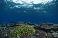 6.3:200:134:0:0:サンゴ:right:1:1:サンゴパラダイス:0:
