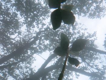 21.8:350:263:0:0:マングローブ:right:1:1:ちょっとレア、な画像。マングローブの川に潜りながら水面を撮影。すくすく育つマングローブの赤ちゃんの様子です。:0: