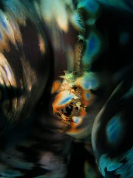 11.5:263:350:0:0:IMG0014:right:1:1:アートな色彩!!さて何の海の生き物かな?:0: