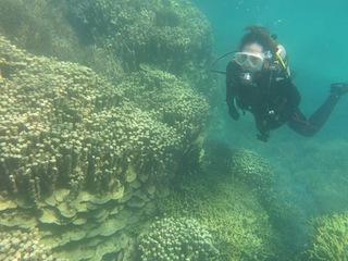 37.6:320:240:0:0:IMG0106:right:1:1:巨大な珊瑚のオブジェ:0:
