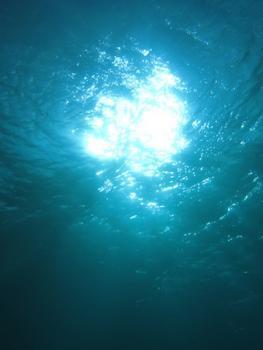 10.2:263:350:0:0:IMG1368:right:1:1:海の中で 人も光合成出来そう:0:
