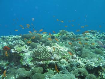 18.6:350:263:0:0:IMG3114:right:1:1:色彩豊かできれいな小魚たちと潜れます:0:
