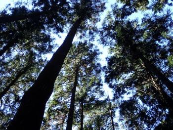 35:350:263:0:0:PB160015:right:1:1:大木の共鳴www 自然の鳴き声w:0: